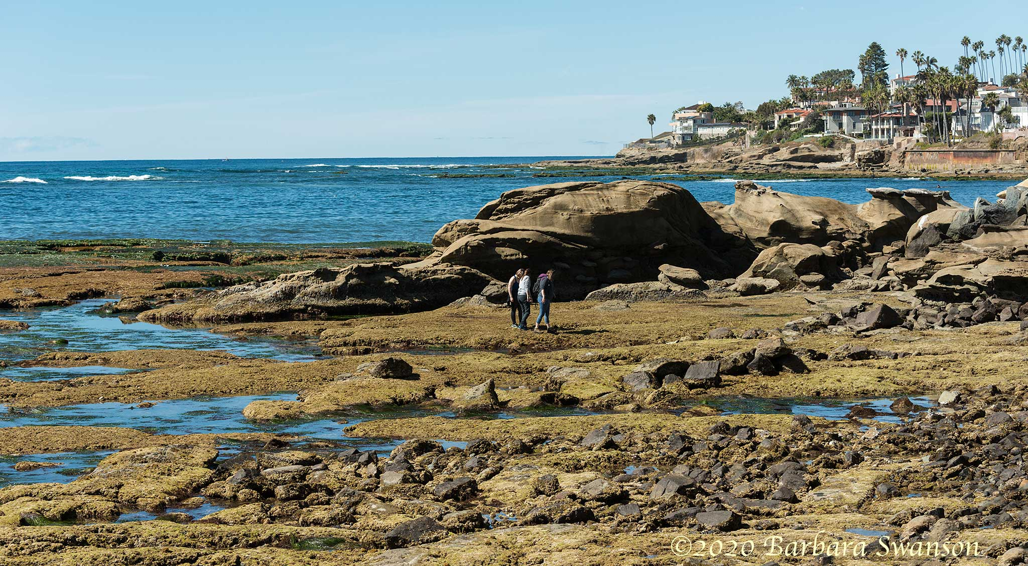 """Tide poolers"" exploring at low tide"