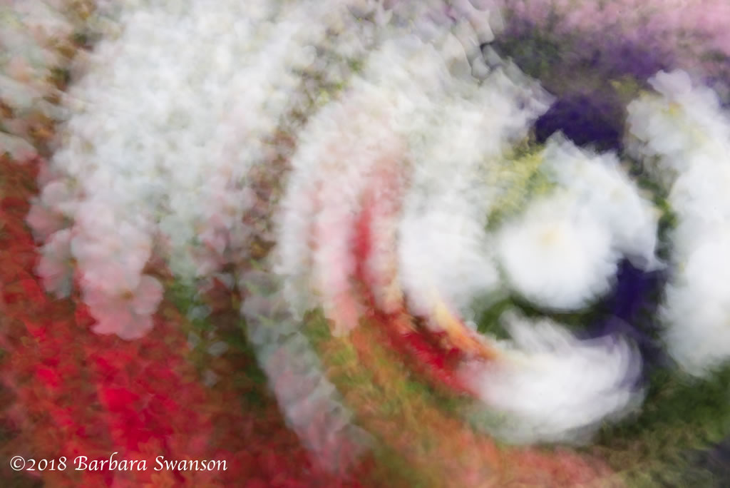 Flower, multiple exposure montage