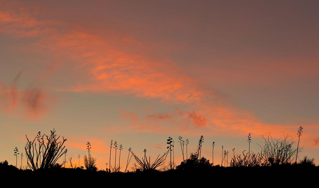 <b>A fluorescent desert sky</b>