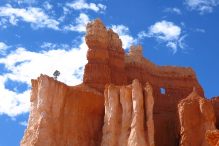 Lone tree and a window, Bryce National Park