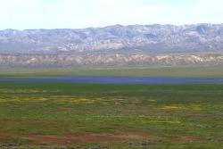 """Lake of Phacelia"" seen from Soda Lake Road overlook"