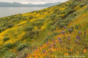 Diamond Valley Lake photo 3