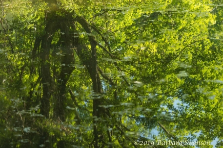 Reflection of Maple trees in Butternut Creek