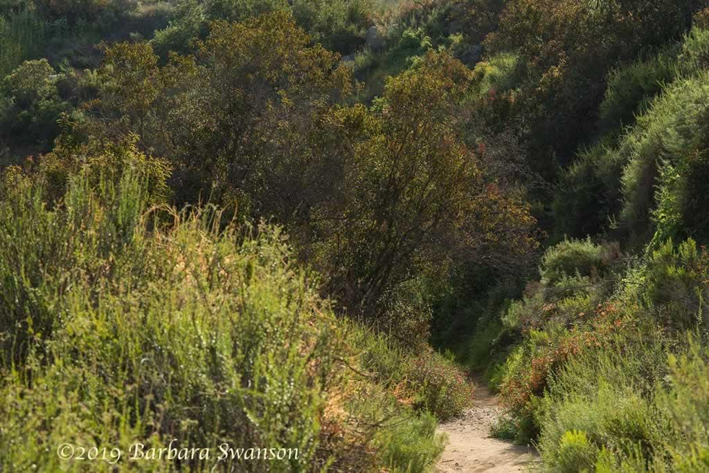 <b>The narrowing trail remains friendly</b>