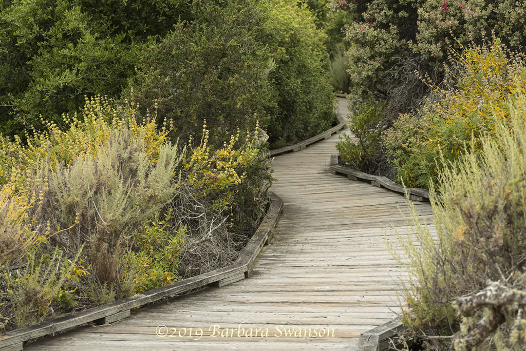 The meandering boardwalk