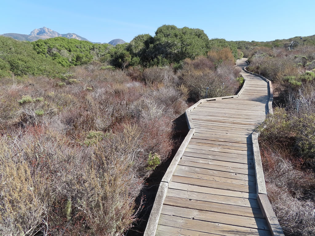 Elfin Forest boardwalk