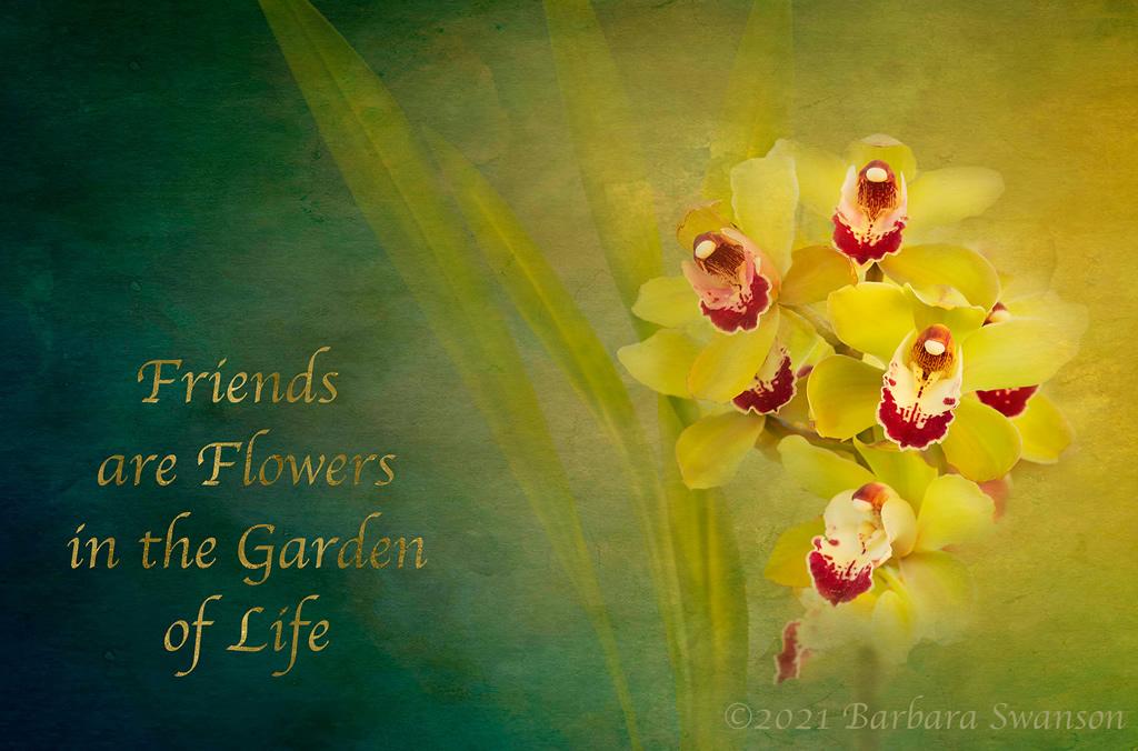 Cymbidium Orchid, March 6-7, 2021