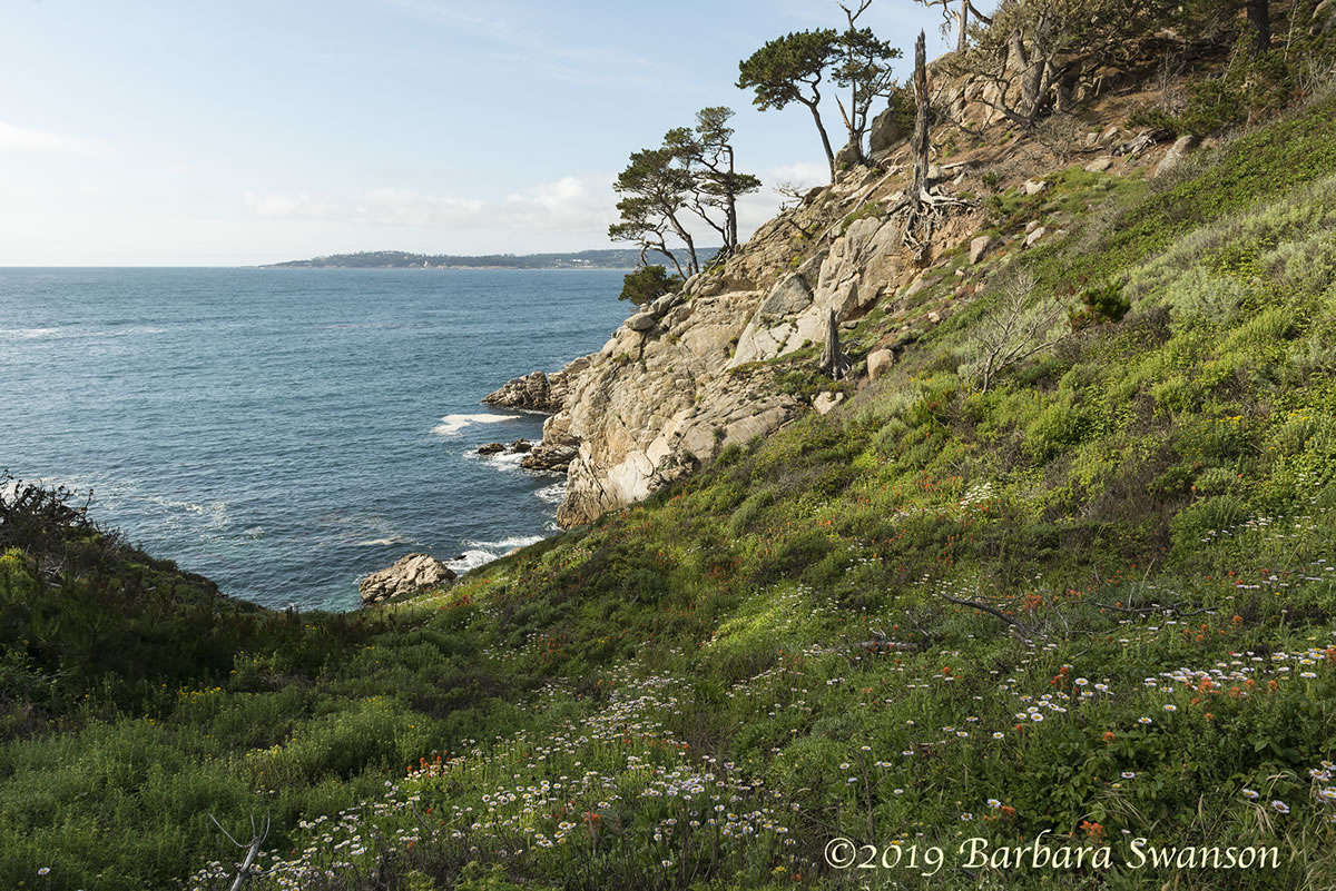 Flowers, view to Carmel Bay