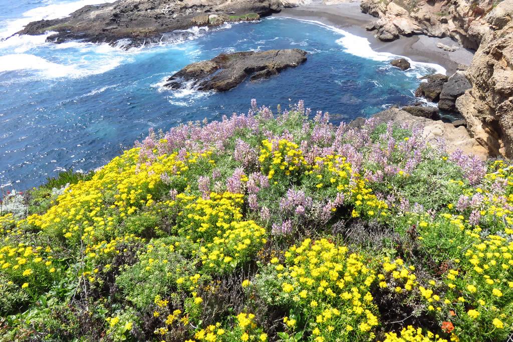 Flowers cliffside, Sea Lion Cove