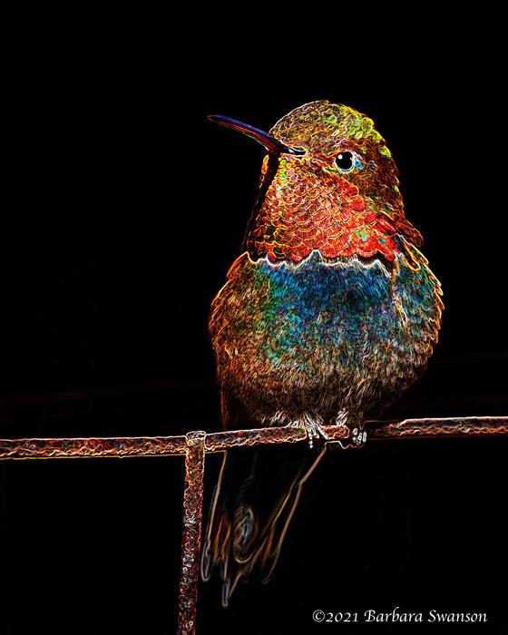 Hummingbird, March 21, 2021