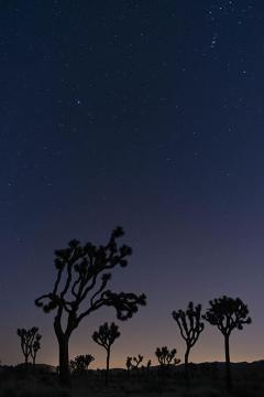 Joshua tree night 2