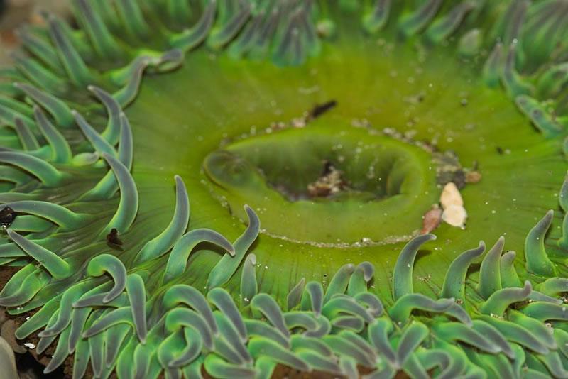 Anemone in the splash zone