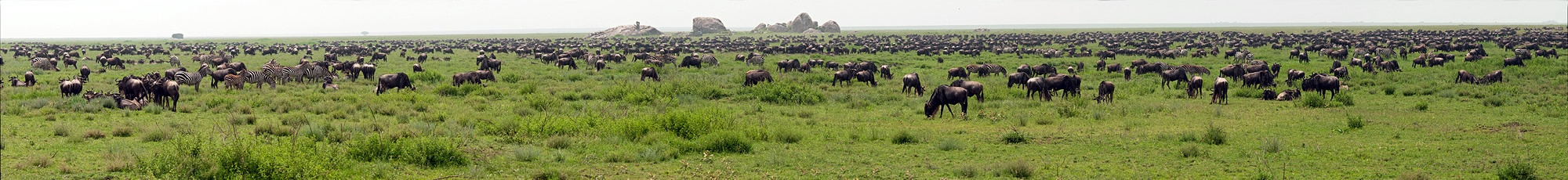 Tanzania, The Great Migration