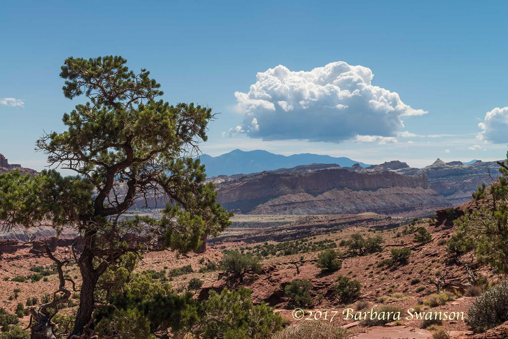 <b>Capitol Reef, beauty from hardscrabble</b>